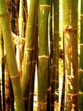 98竹子结构树 库存照片