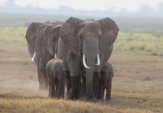 9816 elefanter Royaltyfri Bild