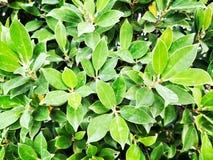 A†‹buske arkivbilder