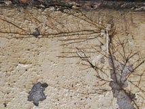 Aρίζα wall Στοκ Φωτογραφία