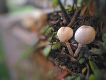 Amushroom& x28; of toadstool& x29; stock foto
