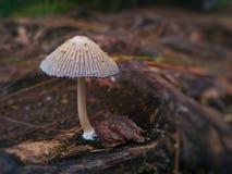 AÂ-mushroomu. x28; oder toadstool& x29; Lizenzfreie Stockfotos