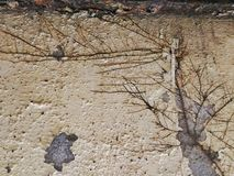 Arotar wall Arkivbild