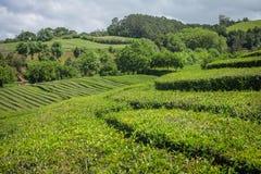 Açores ö den gröna ön Fotografering för Bildbyråer