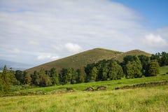 Açoreseiland het groene eiland Royalty-vrije Stock Foto's