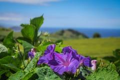 Açoreseiland het groene eiland Stock Afbeelding