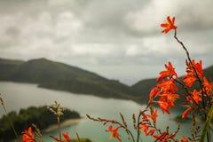 Açoreseiland het groene eiland Stock Foto's
