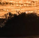 Ação abstrata da onda no por do sol Imagens de Stock