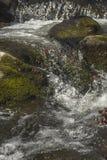 Ação congelada cachoeira Fotografia de Stock