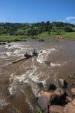 Ação da corredeira dos Paddlers da raça da canoa Fotos de Stock