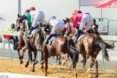 Ação da corrida de cavalos Fotografia de Stock Royalty Free