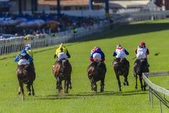 Ação da corrida de cavalos Foto de Stock