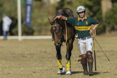 Ação das mulheres do cavalo de PoloCrosse Imagens de Stock