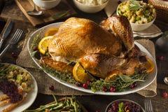 Ação de graças caseiro inteira Turquia Imagens de Stock