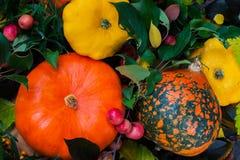 Ação de graças - colheita de abóboras diferentes com folhas coloridas, fundo vívido Fotos de Stock