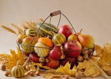 Ação de graças do feriado do outono Ainda vida com abóbora e maçãs, Fotos de Stock Royalty Free