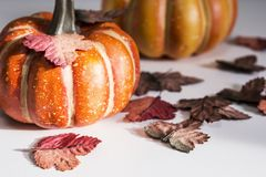 Ação de graças e conceito do Dia das Bruxas da abóbora e das folhas de bordo Imagem de Stock Royalty Free