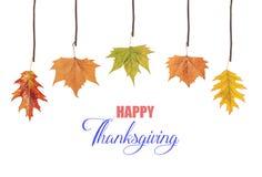 Ação de graças feliz e folhas que penduram no ramo de árvore Foto de Stock