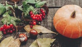 Ação de graças ou cartão do conceito do Dia das Bruxas pumpk bonito Fotos de Stock Royalty Free
