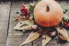 Ação de graças ou cartão do conceito do Dia das Bruxas pumpk bonito Imagens de Stock