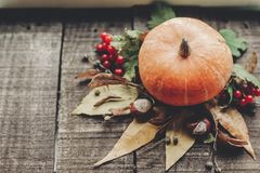 Ação de graças ou cartão do conceito do Dia das Bruxas pumpk bonito Fotografia de Stock