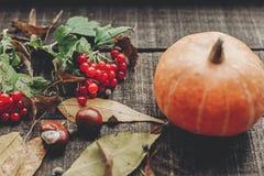 Ação de graças ou cartão do conceito do Dia das Bruxas pumpk bonito Fotos de Stock