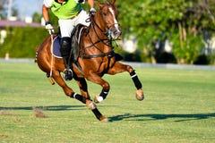Ação disparada de Polo Player Imagens de Stock Royalty Free