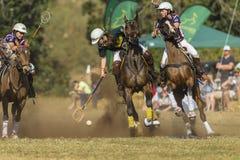 Ação do cavaleiro do campeonato do mundo de PoloCrosse Imagem de Stock Royalty Free