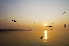 Ação do jogo com nascer do sol Fotografia de Stock Royalty Free