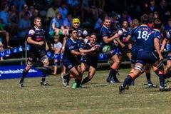 Cinzas Outeniqua do rugby do desafio da bola do jogador Fotos de Stock
