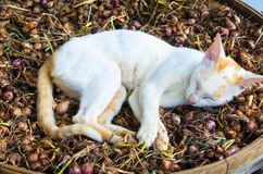 A ação do sono do gato do bichano na terra da terra Imagem de Stock Royalty Free
