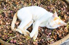 A ação do sono do gato do bichano na terra da terra Imagens de Stock Royalty Free