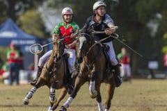 Ação dos cavaleiros de Polocrosse Imagens de Stock Royalty Free