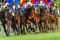 Ação dos pés de Hoofs dos animais da corrida de cavalos Imagem de Stock Royalty Free