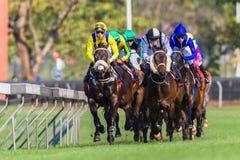 Ação Front Photo da corrida de cavalos Imagem de Stock