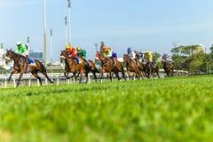 Ação running da corrida de cavalos Imagem de Stock Royalty Free