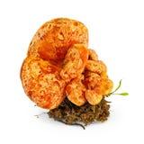 Aç6frão do cogumelo Fotografia de Stock