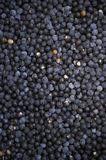 Açaí Acai Berries Brazilian Farmers Market Royalty Free Stock Image