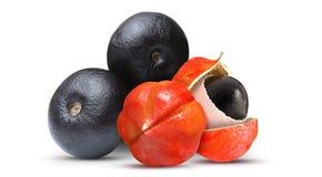 Açaí e Guaraná Frutas tropical imagens de stock royalty free