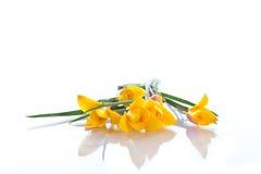 Açafrão amarelo Fotos de Stock
