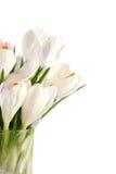 Açafrão branco no branco Foto de Stock