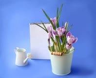 Açafrão da mola e caderno vazio em um fundo azul Imagem de Stock Royalty Free