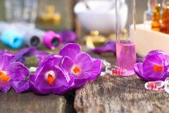 Açafrão da planta medicinal Fotos de Stock Royalty Free