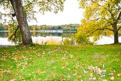 Açafrão de outono pelo lago Fotos de Stock