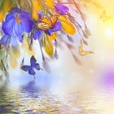 Açafrão e snowdrops azuis e amarelos com salgueiro Imagem de Stock Royalty Free
