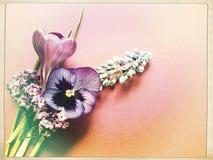 Açafrão, jacinto de uva e amor perfeito Fotos de Stock