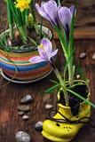Açafrão na sapata amarela astylish Fotografia de Stock Royalty Free