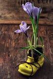 Açafrão na sapata amarela astylish Imagens de Stock