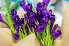 Açafrões bonitos Foto de Stock