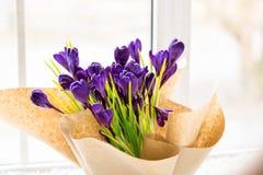 Açafrões bonitos Fotografia de Stock Royalty Free
